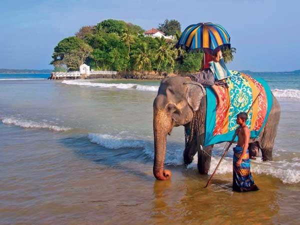 slon-v-indii